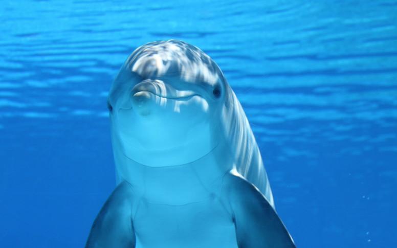 Se buscan voluntarios para pasar un mes de vacaciones de lujo en Croacia cuidando delfines